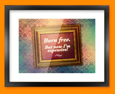Born Free Heart Warmer Framed Print