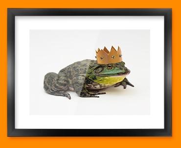 King Frog Framed Print
