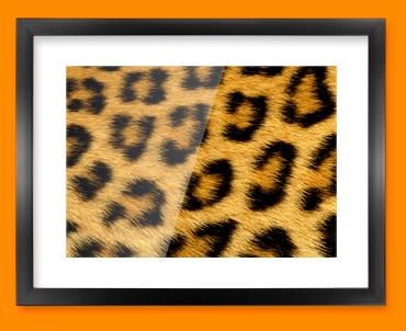 Leopard Animal Skin Framed Print