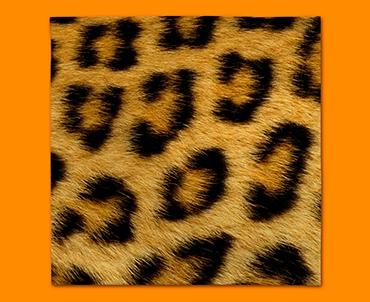Leopard Animal Skin Napkins (Set of 4)