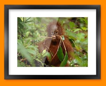Monkey in Trees Framed Print