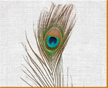 Peacock Feather Canvas Art Print