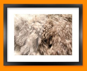 Rabbit Animal Skin Framed Print