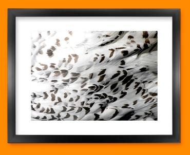 Snowy Owl Animal Skin Framed Print