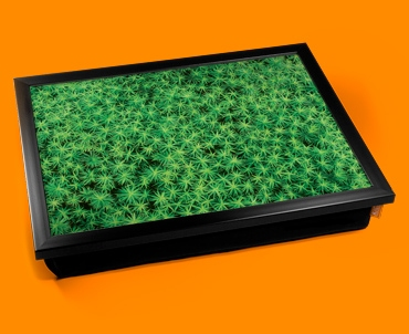 Spikey Moss Cushion Lap Tray