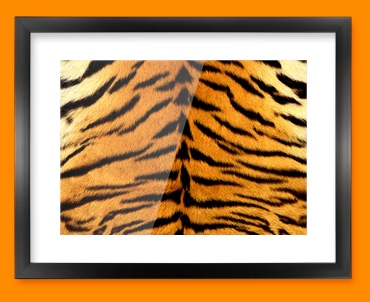 Tiger Animal Skin Framed Print