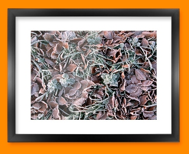 Winter Leaves Framed Print