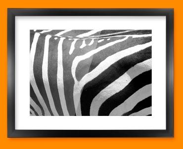 Zebra Animal Skin Framed Print