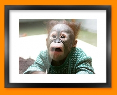 Funny Monkey Framed Print