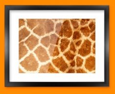 Giraffe Animal Skin Framed Print