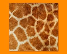 Giraffe Animal Skin Napkins (Set of 4)