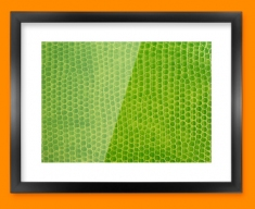 Green Snake Animal Skin Framed Print
