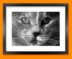 Grey Cat Framed Print