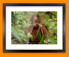 Monkey in Trees Framed Print