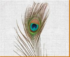 Peacock Feather Canvas Art Print