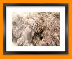 Rabbit Animal Skin Framed Print