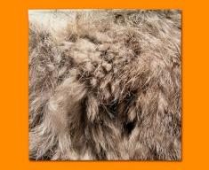 Rabbit Animal Skin Napkins (Set of 4)