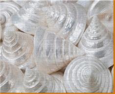 Sea Cone Shells Canvas Art Print