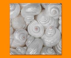 Sea Shells Napkins (Set of 4)