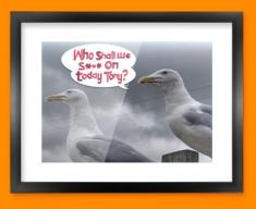 Seagull Humour Framed Print