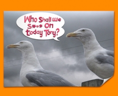 Seagull Humour Poster