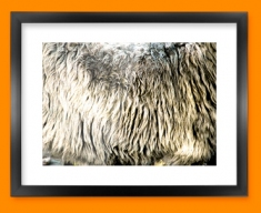 Sheep Animal Skin Framed Print