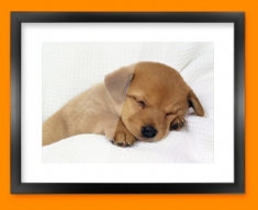 Sleeping Puppy Framed Print