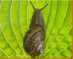 Snail Canvas Art Print