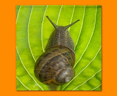Snail Napkins (Set of 4)