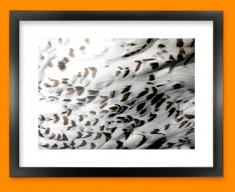 Snowy Owl Animal Skin Framed Print