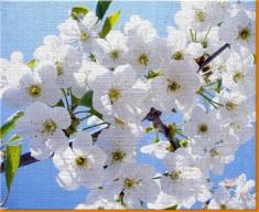 White Flowers Canvas Art Print