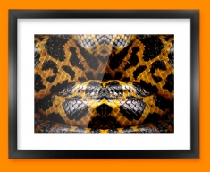 Yellow Snake Animal Skin Framed Print