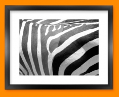 Zebra Animal Skin Framed Print