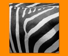 Zebra Animal Skin Napkins (Set of 4)